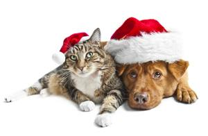 Keep Your Pets Healthy During the Holiday Season