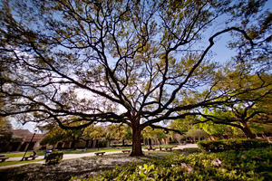 Arbor Day Foundation Names LSU a 2012 Tree Campus USA